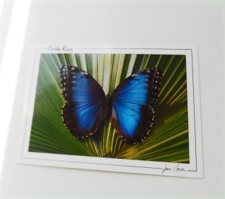 Postcards 8
